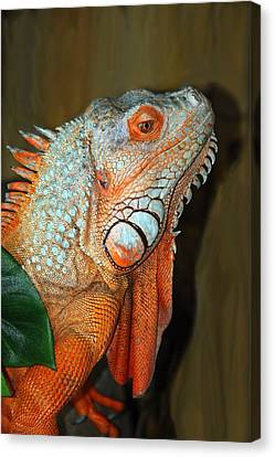 Canvas Print featuring the photograph Orange Iguana by Patrick Witz
