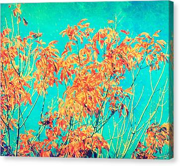 Orange Leaves And Turquoise Sky  Canvas Print by Elizabeth Budd