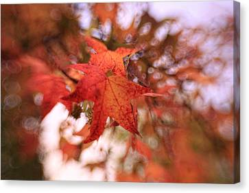 Canvas Print featuring the photograph Orange Leaves by Heather Green