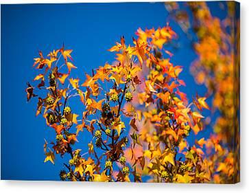 Orange Leaves Canvas Print by Mike Lee
