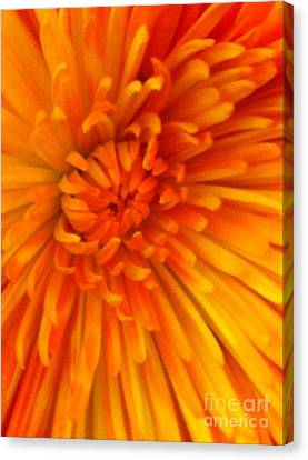 Orange Light Canvas Print