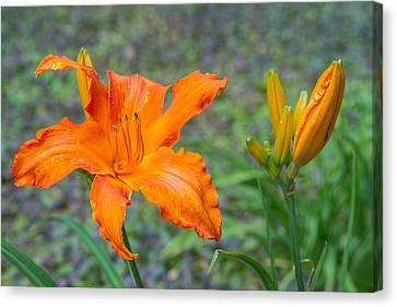 Orange Lily 6 Canvas Print