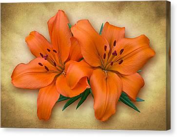 Orange Lily Canvas Print by Jane McIlroy