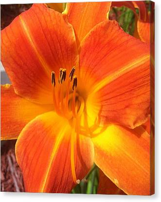 Canvas Print featuring the photograph Orange Lily by Saribelle Rodriguez