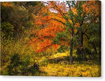 Orange Maples Under A Hill Canvas Print by Fred Adsit