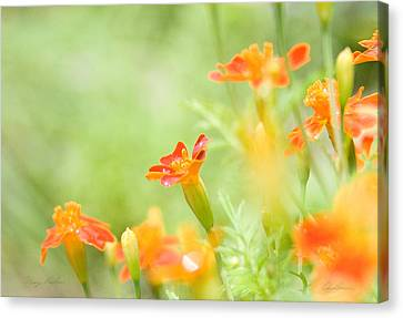 Canvas Print featuring the photograph Orange Meadow by Ann Lauwers