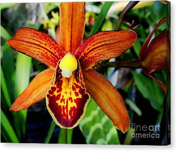Orange Orchid Canvas Print by Kristine Merc
