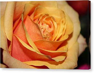 Canvas Print featuring the photograph Orange Passion by Judy Palkimas