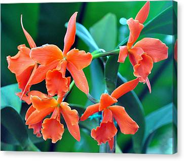 Orange Perfection Canvas Print by Gail Butler