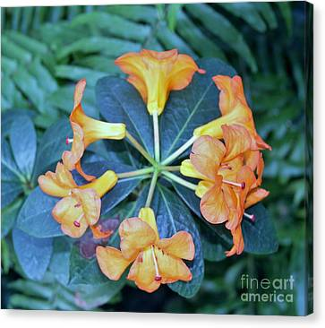 Orange Power Canvas Print by Butch Phillips