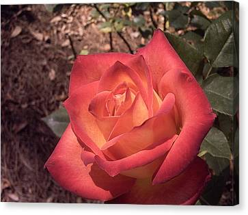 Canvas Print featuring the photograph Orange Rose by Michele Kaiser