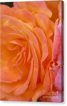 Orange Rose Swirl Canvas Print