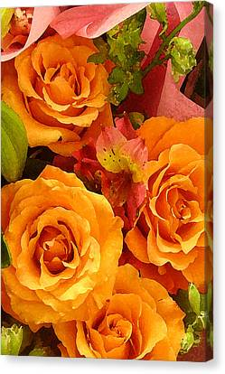 Orange Roses Canvas Print by Amy Vangsgard