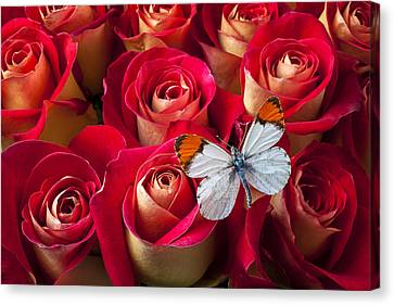 Orange Tip Butterfly Canvas Print by Garry Gay