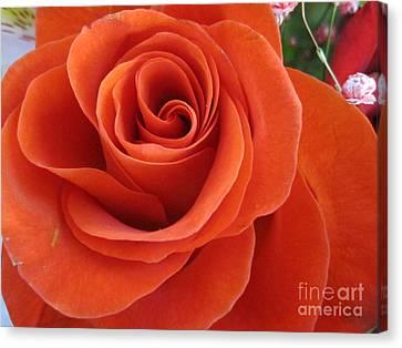 Orange Twist Rose 2 Canvas Print by Tara  Shalton