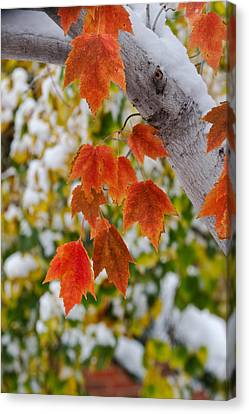 Canvas Print featuring the photograph Orange White And Green by Ronda Kimbrow