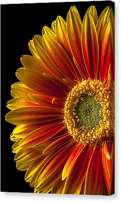 Orange Yellow Mum Close Up Canvas Print by Garry Gay