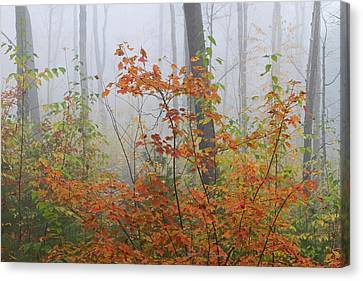 Western Ma Canvas Print - Orange You Glad by Juergen Roth
