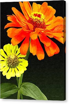 Orange Zinnia And Yellow Zinnia Canvas Print by Susan Savad