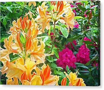 Orangeburst Canvas Print by Aimee L Maher Photography and Art Visit ALMGallerydotcom