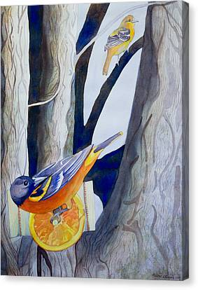 Oranges And Orioles Canvas Print