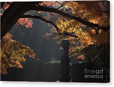 Canvas Print featuring the photograph Orangish by Steven Macanka