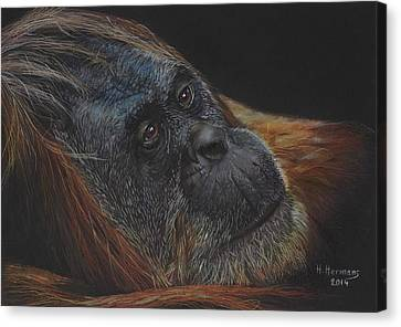 Orangutan Canvas Print by Hendrik Hermans