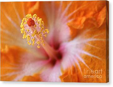 Orangy Goodness Canvas Print by Peggy Hughes