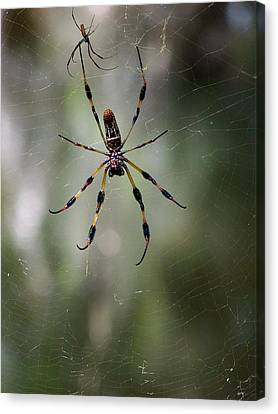 Canvas Print featuring the photograph Orb Weaver 006 by Chris Mercer