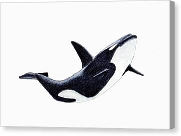 Orca - Killer Whale Canvas Print by Michael Vigliotti