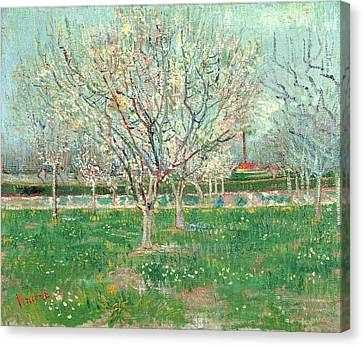 Orchard In Blossom, 1880  Canvas Print by Vincent van Gogh