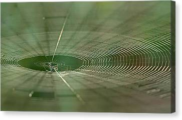 Canvas Print featuring the photograph Orchard Orbweaver #2 by Paul Rebmann