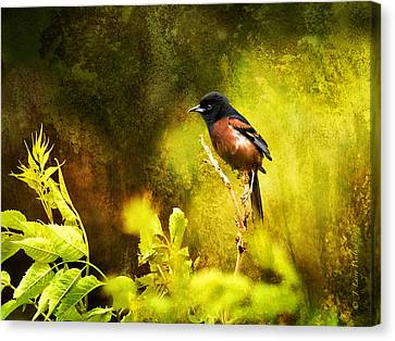Orchard Oriole Canvas Print by J Larry Walker