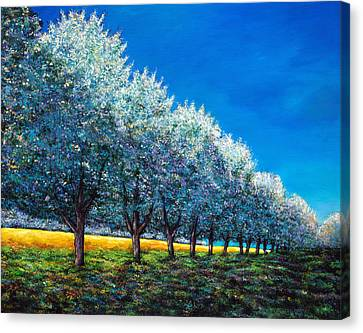 Orchard Row Canvas Print by Johnathan Harris