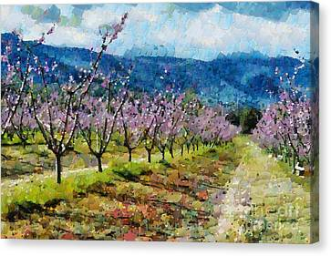 Orchard Views Canvas Print by Fran Woods