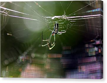 Canvas Print featuring the photograph Orchard Web by Greg Allore