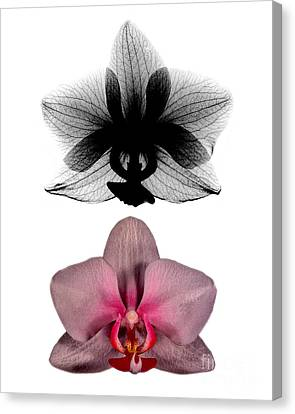 Orchid And Its X-ray Canvas Print by Bert Myers