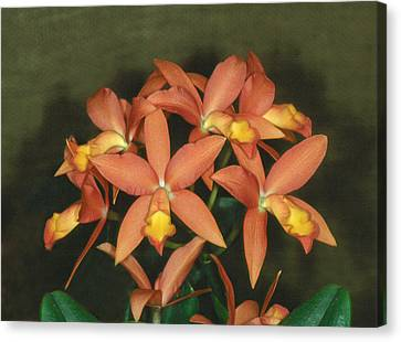 Orchid 3 Canvas Print by Andy Shomock