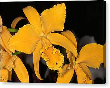 Orchid 5 Canvas Print by Andy Shomock