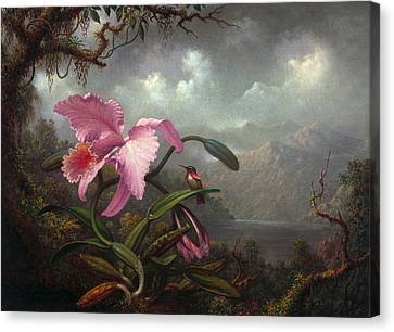 Orchids Canvas Print - Orchid And Hummingbir by Martin Johnson Heade