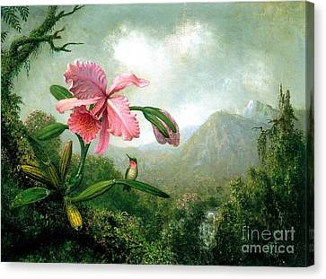 Orchid And Hummingbird Canvas Print by Pg Reproductions