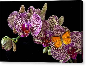 Orchid And Orange Butterfly Canvas Print by Garry Gay