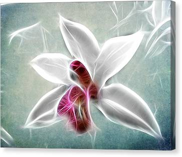 Orchid Blues Canvas Print by Fiona Messenger