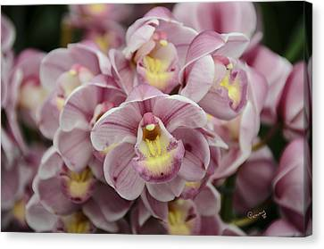 Orchid Bouquet Canvas Print