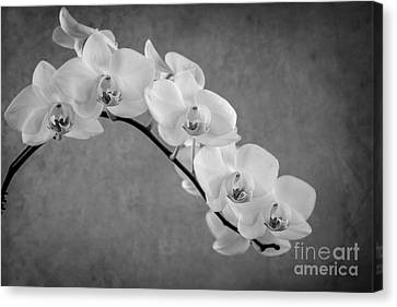 Orchid Bw Canvas Print by Hannes Cmarits