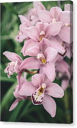 Orchid Cascade Canvas Print by Nastasia Cook