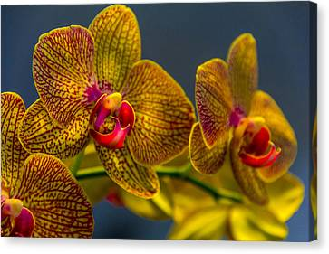 Orchid Color Canvas Print by Marvin Spates