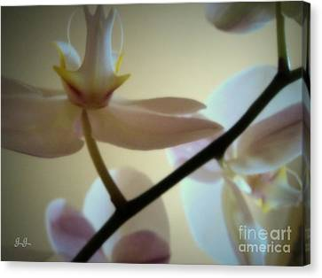 Canvas Print featuring the photograph Orchid Composition by Geri Glavis
