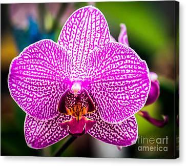 Orchid Flower Canvas Print by Edward Fielding