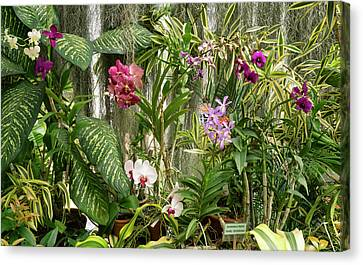 Orchid Flowers In Royal Botanical Canvas Print